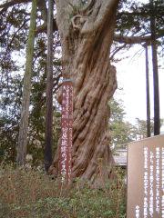 Odawara09