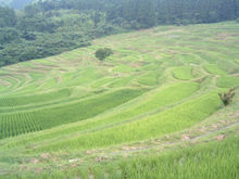 Chiba19